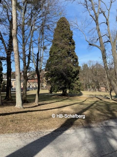 Pötzleinsdorfer Schlosspark nahe Haus am Schafberg